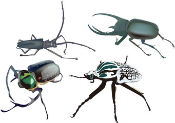 vector illustration of beetle