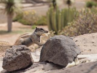 Streifenhörnchen mit Futter im Maul
