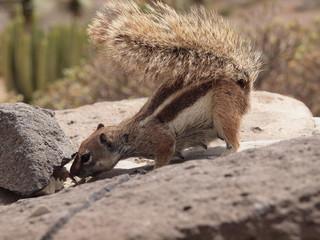 Streifenhörnchen sucht Futter