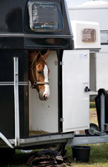Pferd im Pferdeanhänger