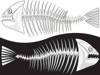 Bones of a skeleton of fish