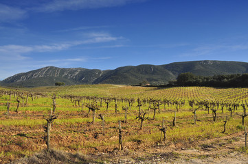 Vineyards near the mountain