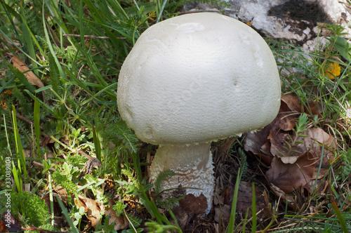 Tipi di un fungo di unghia su mani di fotografia