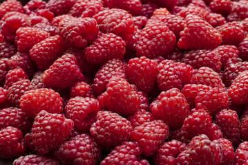 Freshly picked red raspberries