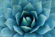 Agave Plant - 33091630