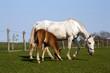 Pferde in Ranzow