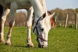 Pferde in Ranzow 2