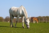 Pferde in Ranzow am Schloss