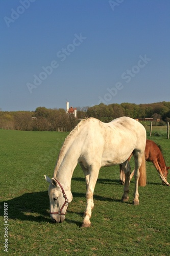 Pferde in Ranzow am Schloss 2