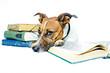 Hund studiert