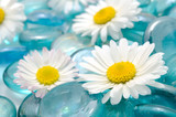 Daisy Flowers on Blue Glass Stones