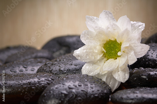 black stones and white flower