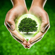 mains écologie arbre planète / green globe tree earth in hands