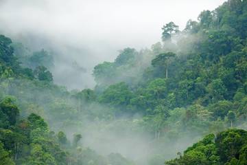 rainforest morning fog © Stéphane Bidouze