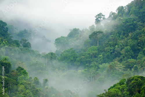 Staande foto Bossen rainforest morning fog