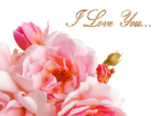 Roses isolated with love message