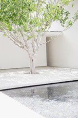 Tree in garden with pool