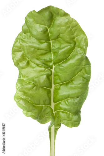 Garden fresh Swiss chard with clipping path