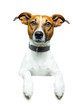 Hund mit plakat