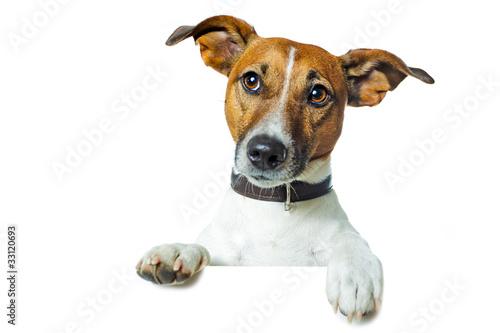 Hund mit plakat oder banner