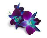 Fototapeta płatek - natura - Kwiat