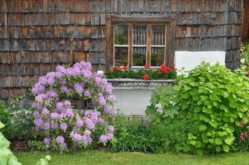 Blumenfenster in den Alpen