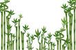 Fototapeten,bambus,grün,zaun,hintergrund