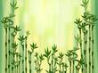 Fototapeten,bambu,stock,abbildung,grün