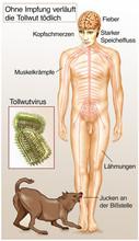 Tollwutvirus.Ohne śmiertelny szczepienie wścieklizna przebiega