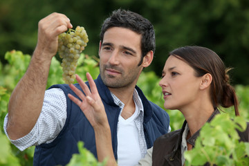 couple of wine growers