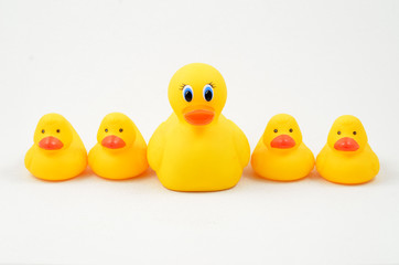 Rubber Duckie and Ducklings