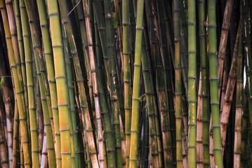 Bambuswald 2