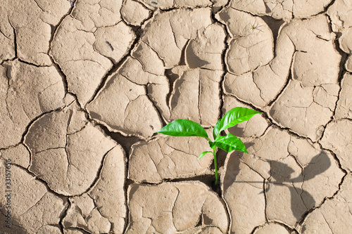 Green sprout on barren soil concept - 33157656