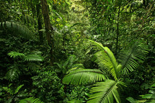"Постер, картина, фотообои ""Dense Tropical Rain Forest"""
