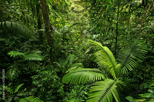 Dense Tropical Rain Forest - 33160284