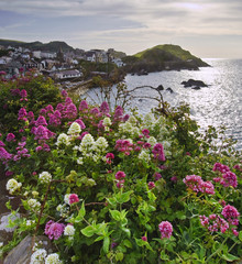 View of English seaside town through bright vibrant flowers on t