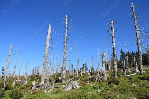 Trees in the Polish mountains destroyed by acid rain.