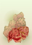 hand drawn red roses on sepia background