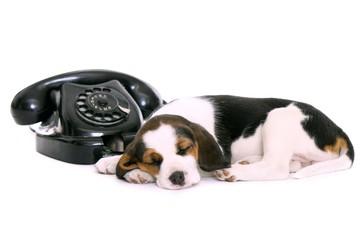 schlafender Welpe mit Telefon