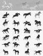 Collection of horses4