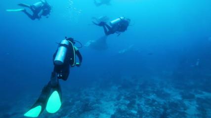 Divers meet mantas on Ari-Atoll manta point, Maldives