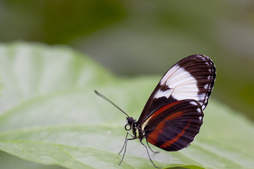 Schmetterling © Matthias Buehner