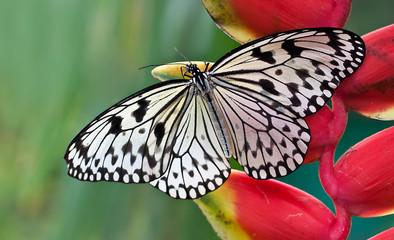Schmetterling Butterfly © Matthias Buehner