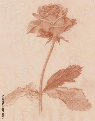 Deurstickers Retro freehand vintage style rose