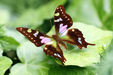 gorgeous butterfly