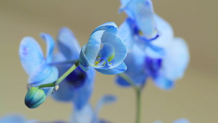 Blue Orchid Track 02