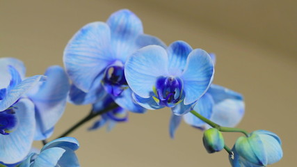 Blue Orchid Track