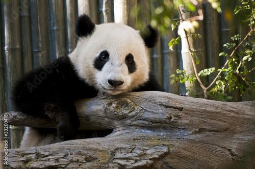 Fototapeta tłuszcz - chiński - Ogólny widok