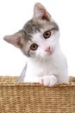 Fototapete Jung - Kitty - Haustiere