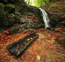 A waterfall and log in autumn in a temperate rain forest